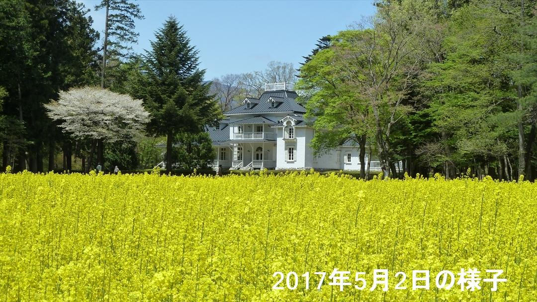 nanohana_20170502_02.jpg