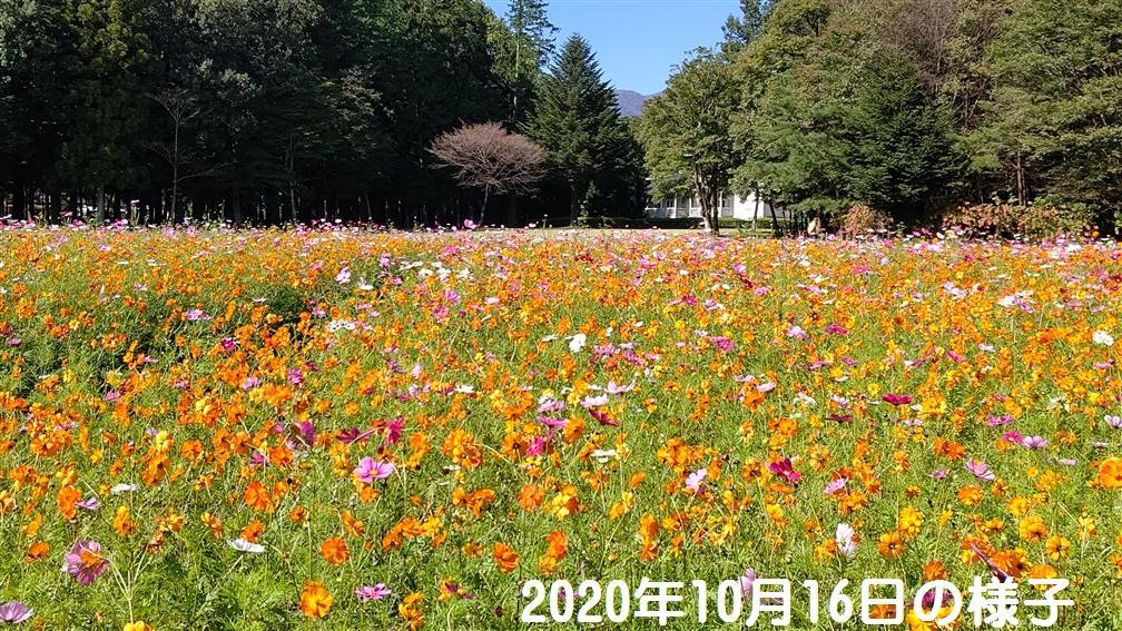 Cosmos_20201016_01.jpg