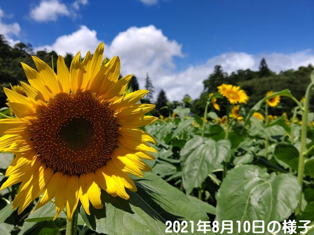 himawari_20210811_2.jpg