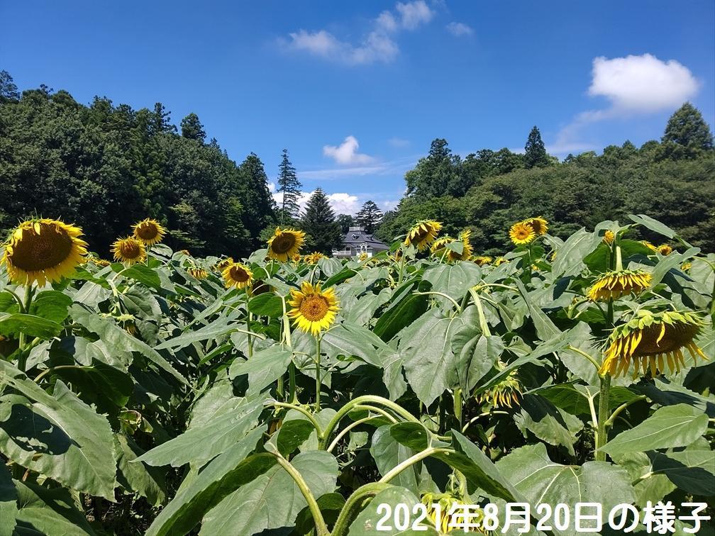 himawari_20210820_1.jpg